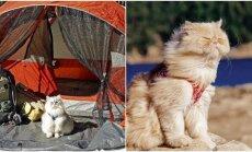 Kačių atostogos