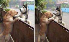 Šunų draugystė