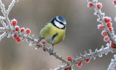 """Ką būtina nuveikti sode, darže ir gėlyne <span style=""""color: #ff0000;"""">gruodžio mėnesį</span>"""