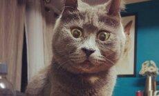 Nustebusi katė