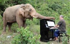 Plinta jautrus vaizdo įrašas: vyras kasdien groja akliems drambliams