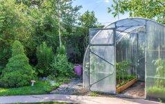 Kaip pasirūpinti šiltnamio daržovėmis per karščius?