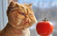 JUOKINGA: katinukai, kurie elgiasi labai kvailai VIDEO