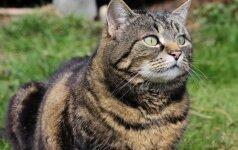 Prieš 11 metų dingusi katė grįžo pas šeimininkus