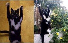 Katė, sprogdinanti internetą: nuotrauka prajuokino pasaulį