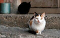Šiauliuose katės ir katinai bus sterilizuojami nemokamai