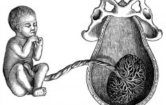 Siūlo po gimdymo neišmesti virkštelės ir paversti ją meno kūriniu