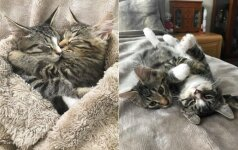 Norėjo vieno, bet priglaudė du: neišskiriami kačiukai parodė, kaip nori likti kartu