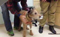 10 milijonų peržiūrų: aklas šunelis pagaliau pamato savo šeimininkus