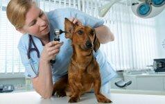 Didžiausia šunų baimė – vizitas pas veterinarą