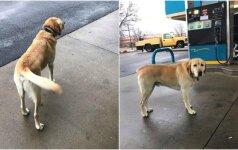 Šuns nuotykiai šeimininkų nebestebina: keliavimas - jo aistra