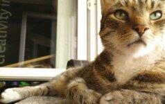 Šis katinas neatrodo labai patenkintas nauju šeimos nariu
