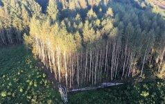 """Neoficiali miškų plotų statistika gali """"pradanginti"""" tūkstančius hektarų"""