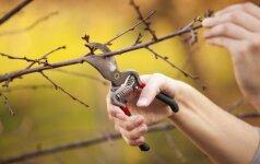 Genėjimas: kaip genėti medžius bei krūmus rudenį?