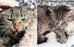Laukinis katinas buvo nevaldomas: seną pikčiurną jaunikliai išmokė švelnumo
