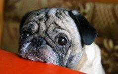 Atsisakoma bandymų su gyvūnais: juos keis naujausios technologijos