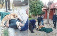 Nepamatuojama šuns ištikimybė: nė minutei nepaliko savo sužeisto šeimininko