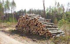 Kertant medžius lietuviams pritrūksta racionalumo