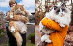 Patys pūkuočiausi ir minkščiausi katinai