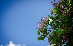 S. Paltanavičius: pavasariui atsisveikinant mes galime dar sykį nustebti