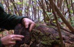 Kas yra kertinės miško buveinės ir kaip jas rasti?