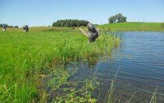 Utena: (ne)eilinis pasibastymas po Šiaurės Lietuvą