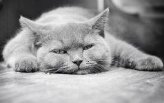 JUOKINGA: katės ir šunys, kurie labai labai nori miego VIDEO