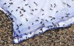 Kaip išvaikyti skruzdes iš namų