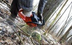 Aplinkos ministerija paaiškino, kodėl prasidėjo masinis miško kirtimas