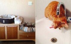 10 įrodymų, kad katės gali būti labai kvailos