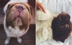 Susipažinkite su mažuoju Bo: tai šuo, pavergęs ne vieną širdį