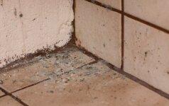 Pelėsis vonioje ir kitose patalpose – kaip atsikratyti?