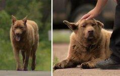 Šunelio įprotis nepalieka abejingų: kasdien jis leidžiasi į 12 km kelionę