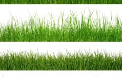 Kraštovaizdžio specialistų patarimai, kaip išnaikinti piktžoles vejoje