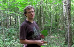 Miškų specialistas: Lietuvoje trūksta nuvirtusių medžių