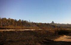 Vyriausybė skyrė lėšų Kuršių nerijos gaisro padariniams likviduoti