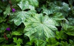 Savaitės orai: vasara atsisveikins kontrastais