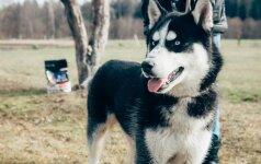 Šunų dresūros specialistas: kaip elgtis, jei šuo nuolatos pabėga ir rausia duobes