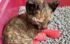 Gaisras katytei galėjo tapti lemtingas: geri žmonės išgelbėjo trapią gyvybę