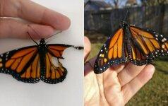 Dizainerė pasiryžo neįprastai operacijai: drugeliui sukūrė naujus sparnus