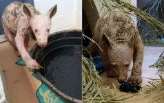 Dėmesį atkreipė keistos išvaizdos gyvūnas: liga jį pakeitė neatpažįstamai