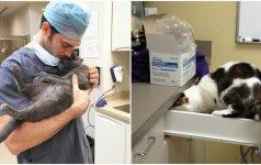 Intriguojantis darbo pasiūlymas: klinika ieško kačių užkalbėtojo