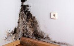 Kodėl sienų šiltinimas iš vidaus prišaukia pelėsį?