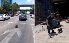 Į judrią gatvę išbėgo šuo: dviratininkė dėl jo rizikavo gyvybe