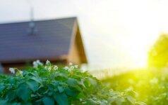 Ką galima statyti sodo sklype?