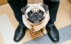 Purina socialinis projektas: gyvūnams draugiškų įmonių laukia malonios staigmenos