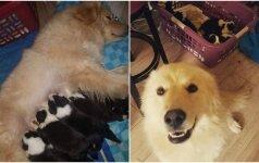 Per gaisrą kalaitė neteko savo šuniukų: gyventi iš naujo padėjo svetimi mažyliai