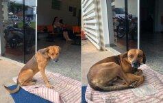 Jaudinanti šuns istorija: sužeisto šeimininko prie ligoninės laukė 4 mėnesius
