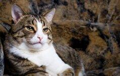 Reto įžūlumo katinas: naują draskyklę ne draskė, o atėjo ir apšlapino