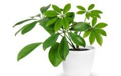 Kambariniai augalai: sezoniniai darbai rugsėjo mėnesį